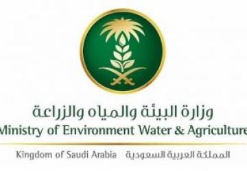 """البيئة"""" تطلق خدمة بلاغات الجراد الصحراوي عبر النظام الإلكتروني """"بلغ"""""""