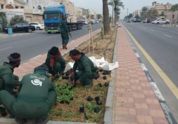 بلدية القطيف: إدارة الحدائق تنتهي من زراعة شارع الحسين بن علي في تاروت