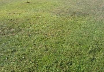 بلدية رفحاء تواصل صيانة الحدائق والمسطحات وتكثيف عمليات الإصحاح البيئي