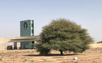 جامعة حائل تحتضن شجرة أكاسيا يقدر عمرها بحوالي ٢٩٣ عامًا