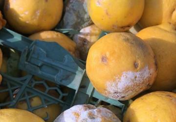 أمانة الشرقية: ضبط 624 كرتون من فاكهة البرتقال والليمون الفاسد في شاحنة قبل توزيعه في سوق الخضار المركزي بالدمام